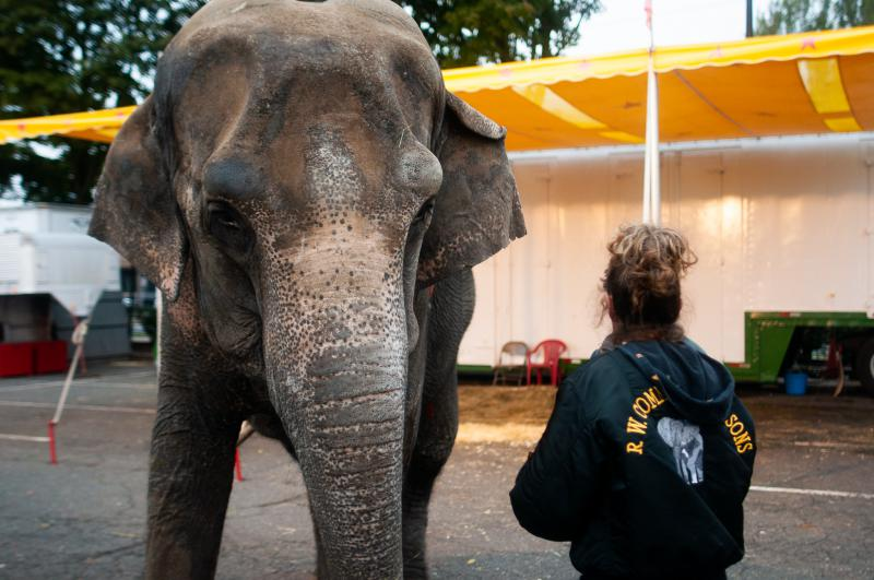 A Commerford employee stands next to the elephant Minnie at the Big E in October.