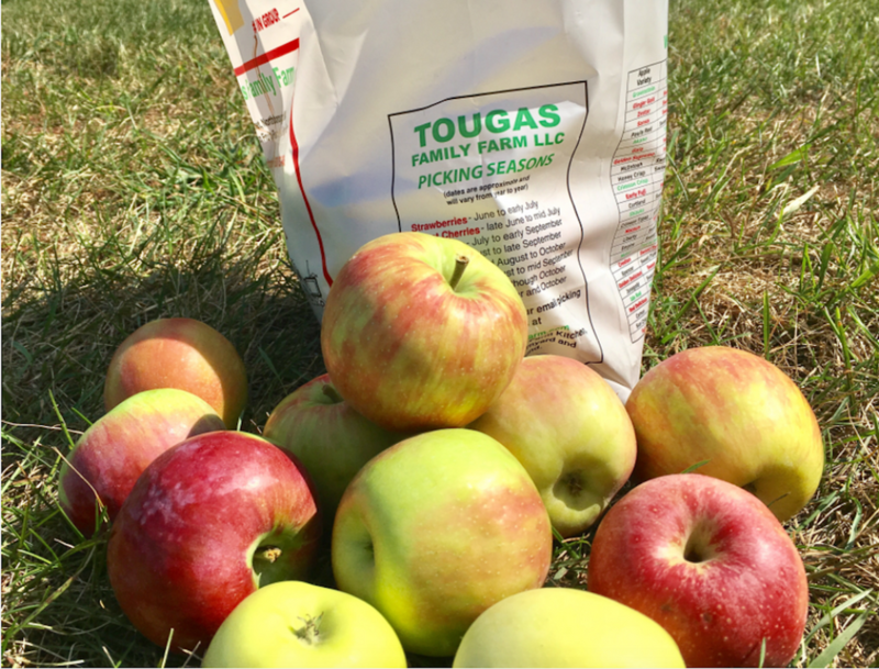 Apples picked from Tougas Family Farms in Northboro, Massachusetts.