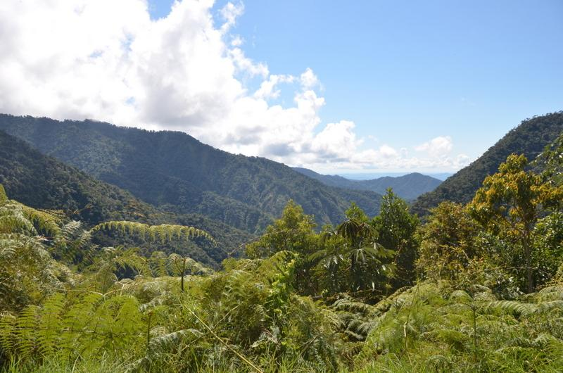 After three days of hiking mostly through dense jungle, we are rewarded with a vista of the Kosnipata Valley in Manu National Park in southern Peru.