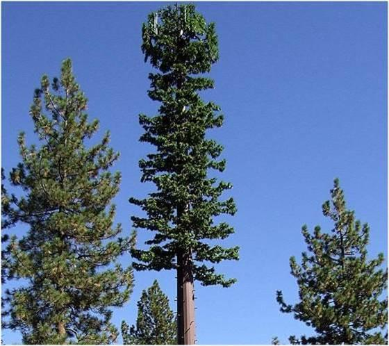 If approved, the proposed cell towers could look like this, a mono-pine. The fake pine leaves conceal the tower and antennas.