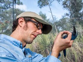 Florida Fish and Wildlife's Craig Faulhaber reads identification numbers from a scrub jay's leg band.
