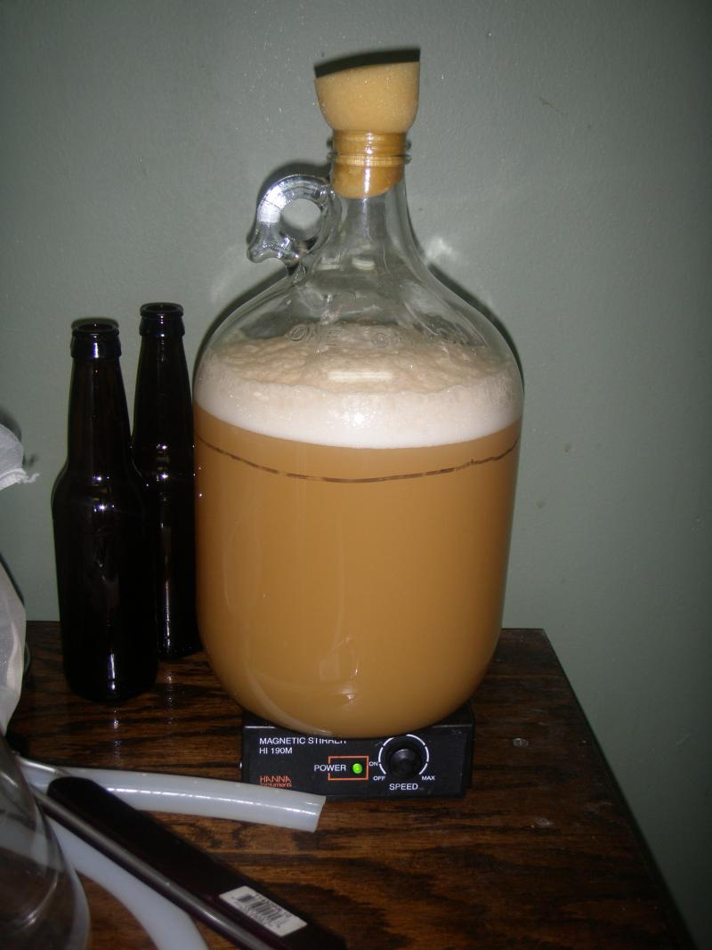 Fermenting the brew yeast.