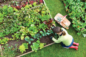 Lawmakers Plot Protect Front Yard Vegetable Gardens | WLRN on florida landscape architecture, florida landscape plants, florida home designs, florida landscaping, florida small garden designs,