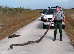 Ranger holding a Python in Florida's Everglades National Park