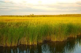 "The Florida Everglades, also known as the ""River of Grass"""