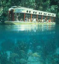 One of the glass-bottom boats used in Silver Springs Park
