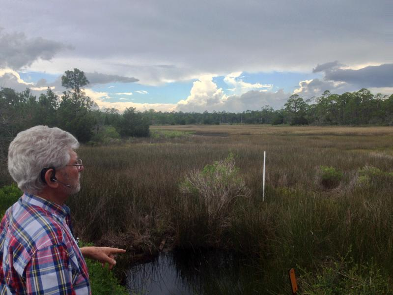 Wakulla County Commissioner Howard Kessler surveys a portion of the county's famed wetlands