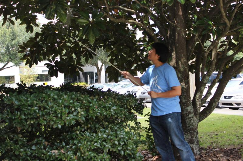 Eden Steven collects a spider web outside the National High Magnetic Field Lab in Tallahassee