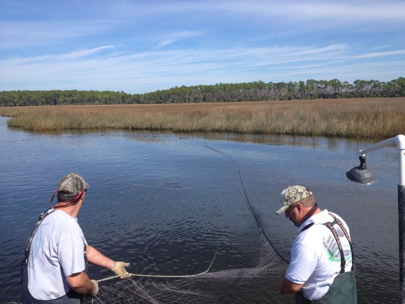 Hours after a judge's ruling, Keith Ward was on the water using a net with a mesh gap larger than two inches.