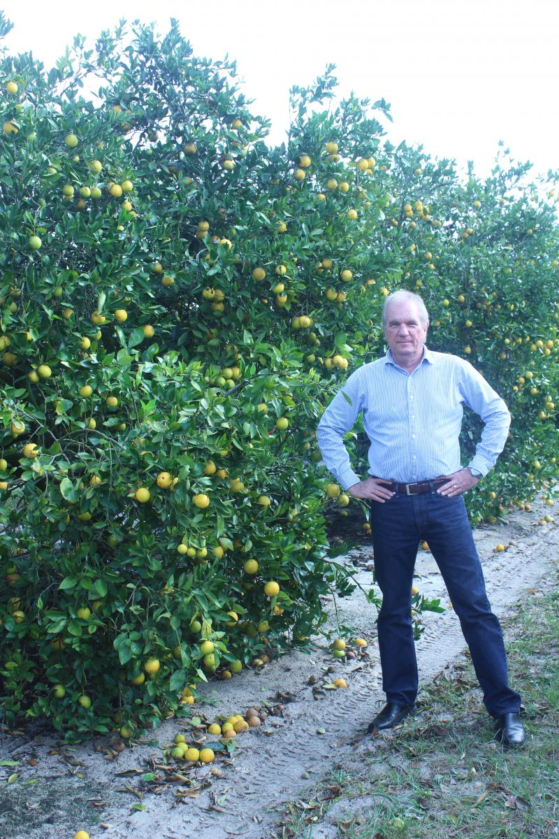 Fred Gmitter and colleagues at the UF Citrus Research and Education Center are working on a variety of possible solutions to greening.