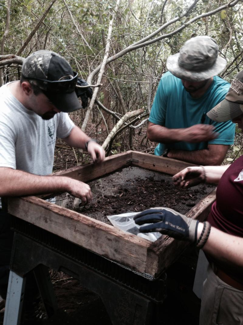 Archeologists sift through midden on Totten Key.