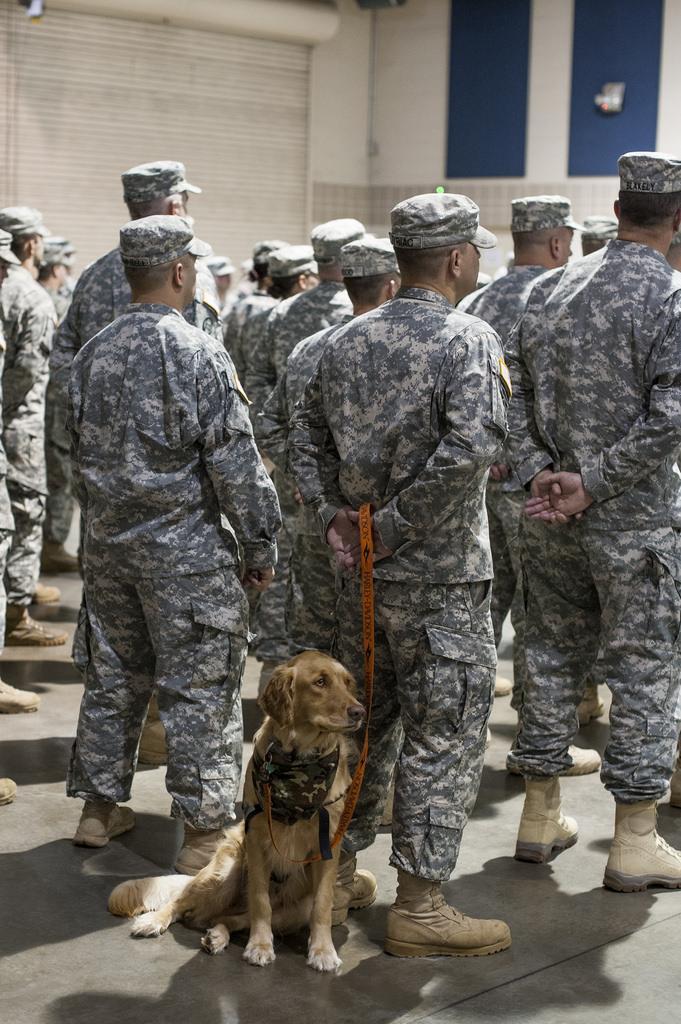 service dog and servicemen