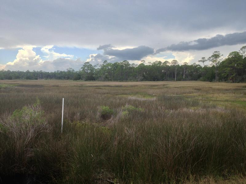 A part of Wakulla County's wetlands