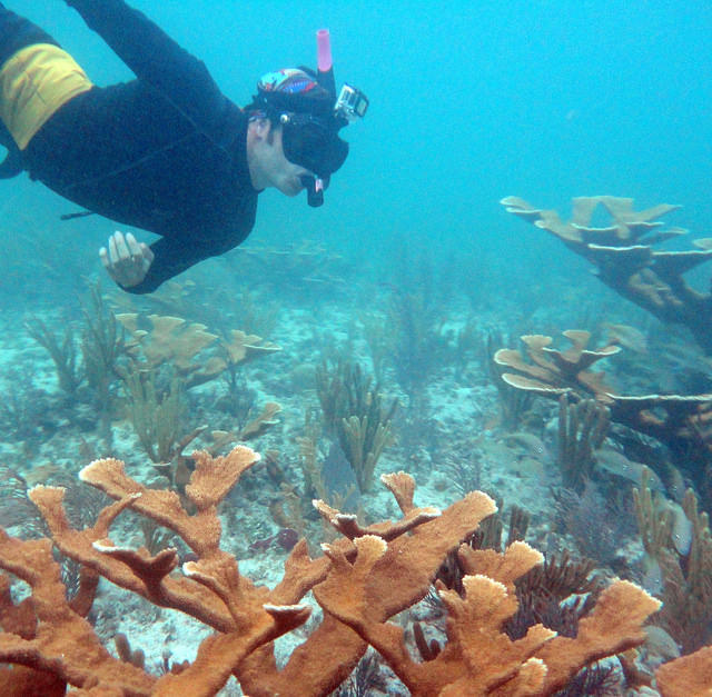 A researcher checks a coral colony