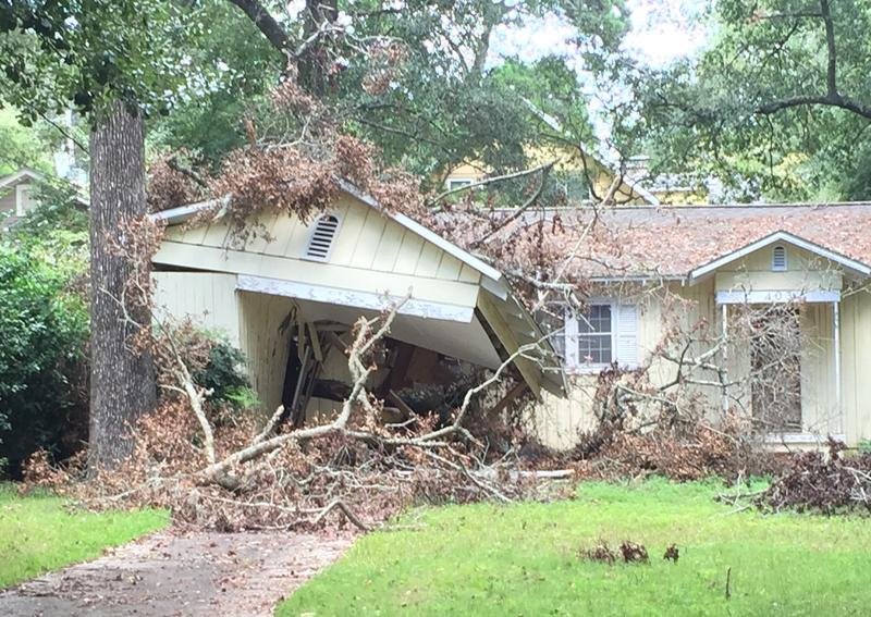 A home hit by a large tree during hurricane hermine