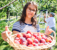 Girl holding basket of plums