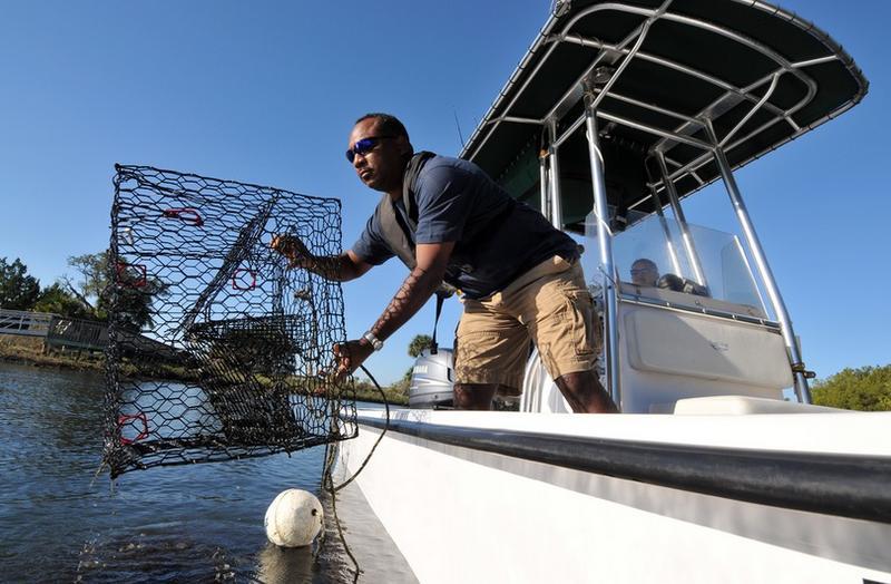 Stuart Cumberbatch removes a blue crab trap