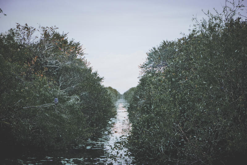 Photo of a water passage cutting through green brush in the Everglades