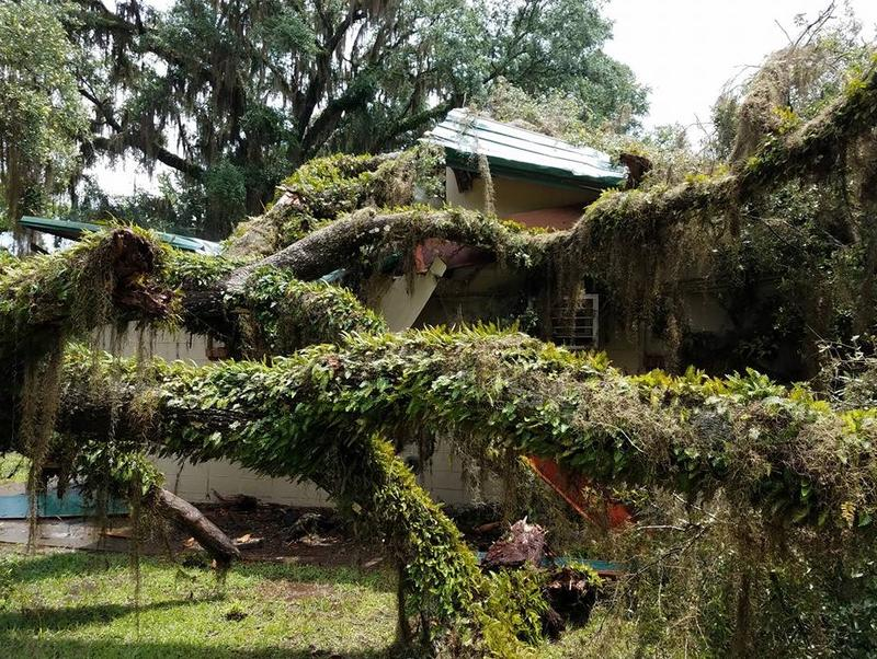 An oak tree recently split the historic Bradfordville Blues Club, a famous Tallahassee music venue.