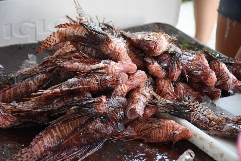 A stack of lionfish from 2018 Lionfish Removal and Awareness Day