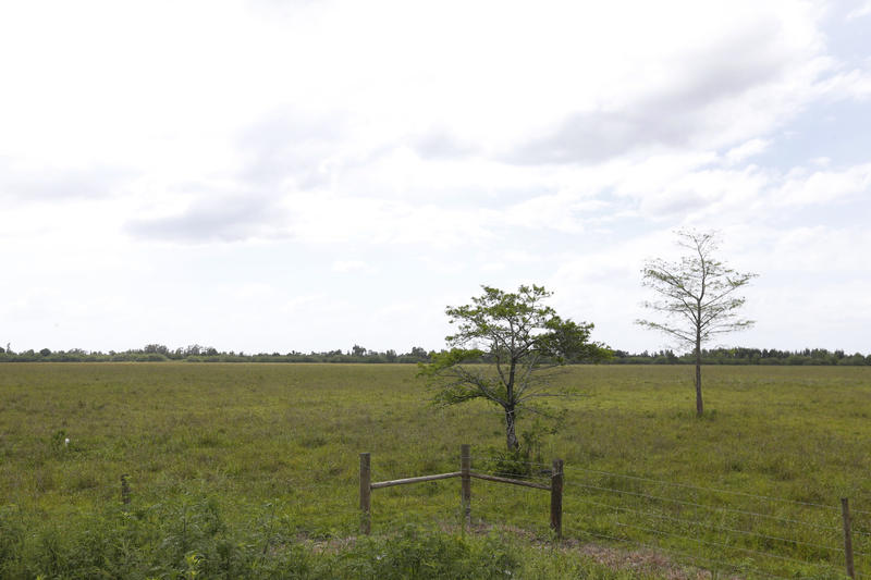 A photo of wetlands, which will be the site of a future mall in Miami