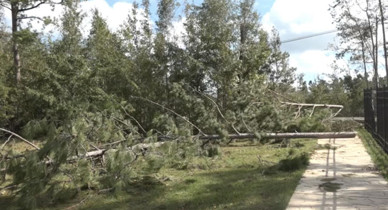 Trees down at Crossroads Academy in Quincy, Florida