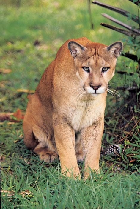 Crowded Florida Panthers May Find New Home In Central