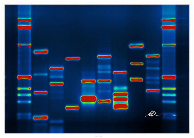 a sequencing of human DNA
