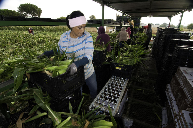 Migrant farm workers face many obstacles in getting health care coverage.
