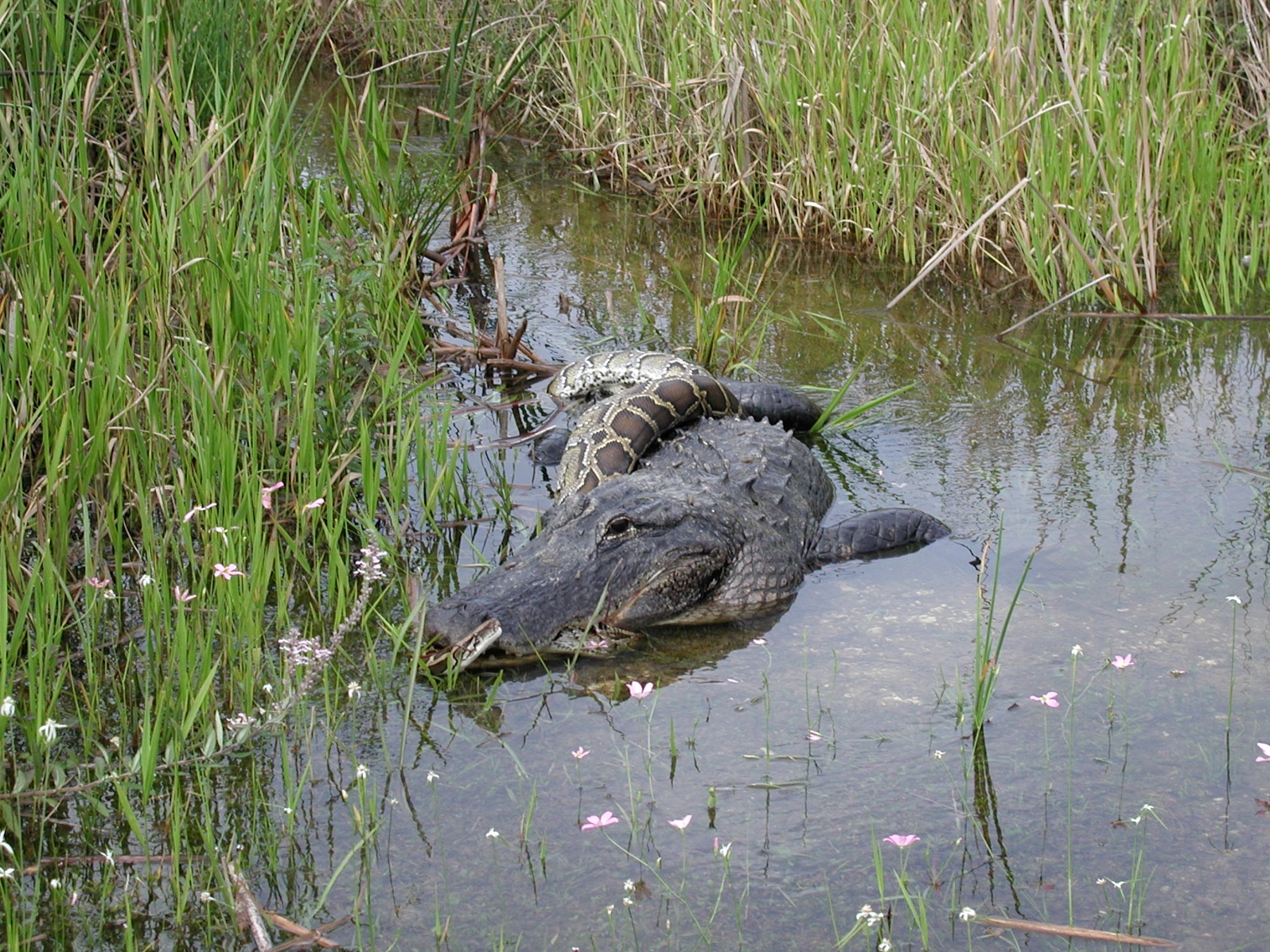 Everglades National Park Final Exam