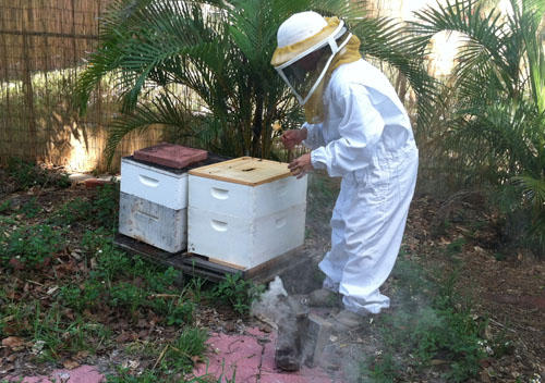 New Law Removes Local Control Of Backyard Beekeepers