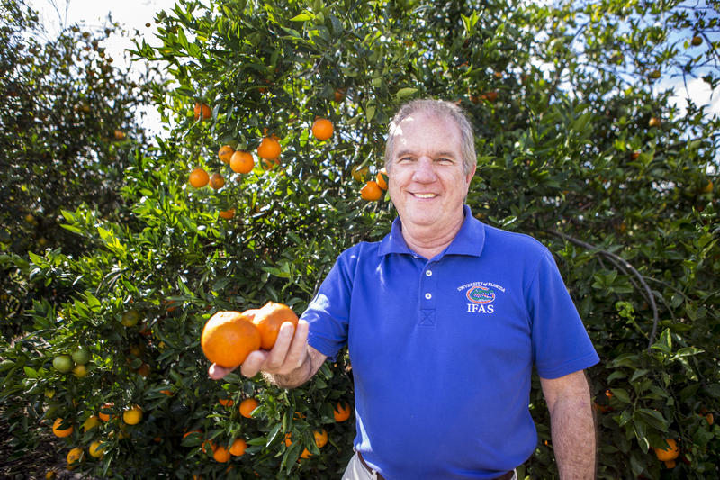 Fred Gmitter, horticultural professor at University of Florida, and his colleagues released a possible solution to the citrus greening disease.