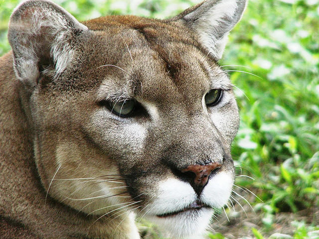 fwc commissioner others ask for legal protection to take panthers