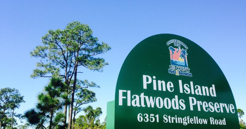 High levels of arsenic were recorded by Lee County and state officials on Pine Island Flatwoods Preserve, a property owned and managed by the county.