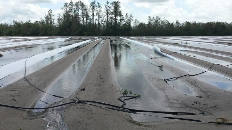 Another vegetable field in Hendry where the water is begining to recede. Irrigation tubing is seen scattered across the field and plastic recently laid down has been washed away.