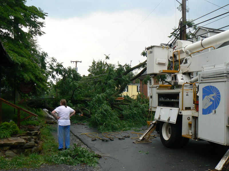 A woman surveys fallen trees and power lines.