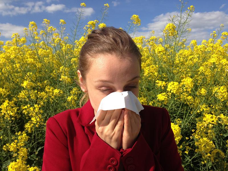 Allergy Sufferer