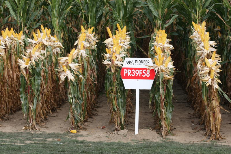 Presentation of Pioneer's PR39F58 maize in Belgium in 2009
