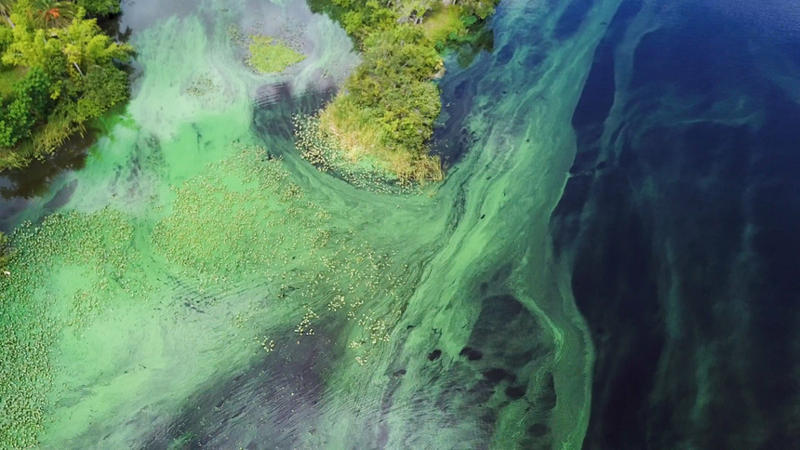 Aerial View of Blue-Green Algae Bloom at the Alva Boat Ramp