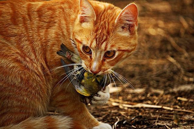 Housecat with a Bird