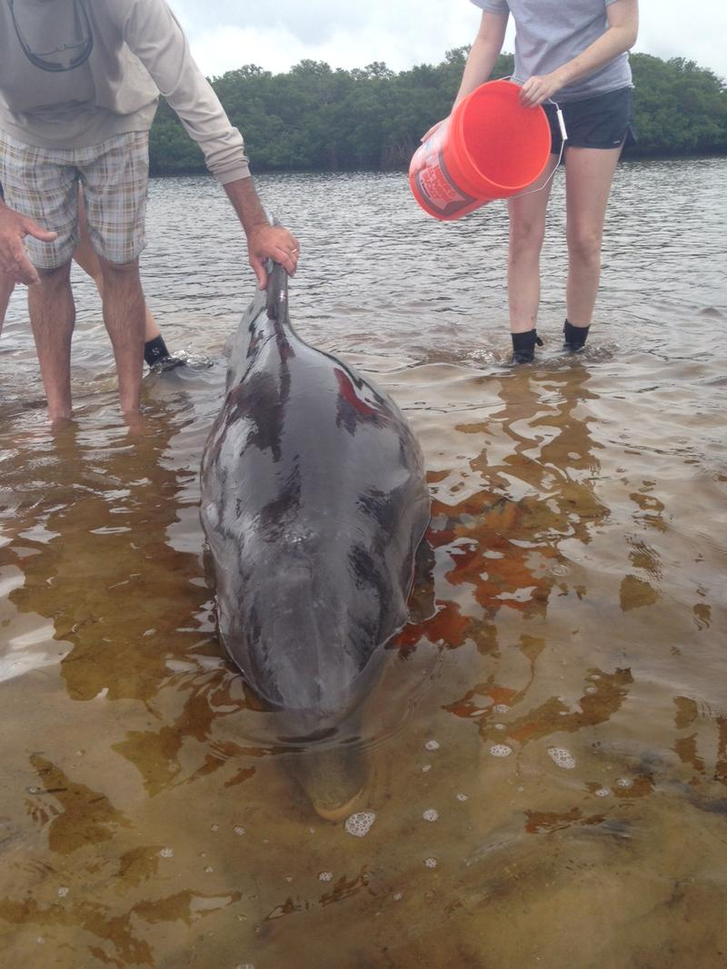 Two men who found a stranded dolphin righted the mammal so it wasn't laying on its side.