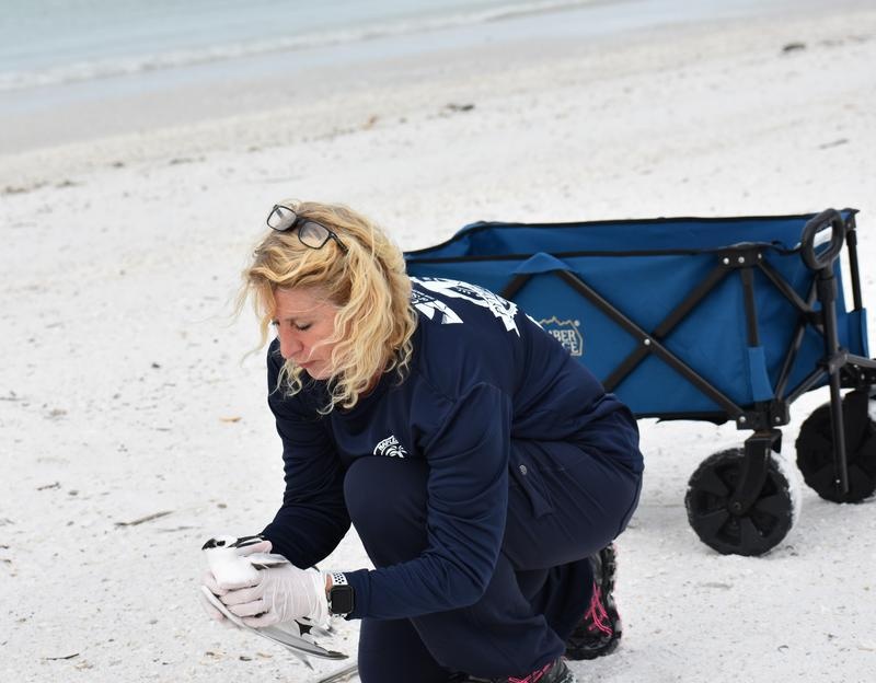 Joanna Metzger catches a sick bird to take to the Von Arx Wildlife Hospital in Naples, many of the birds she loads into her blue wagon don't survive the car ride there.