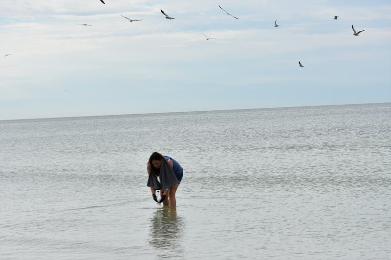 Naples resident and wildlife advocate Colleen Gill picks up a bird that fell out of the sky and into the ocean.