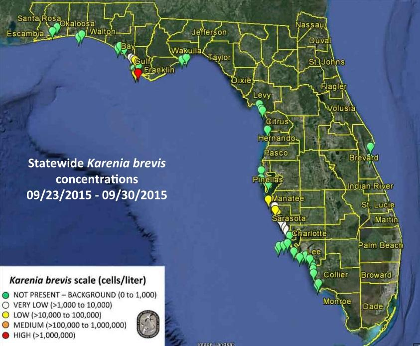 Elevated Red Tide Toxins Detected Along Sarasota Coastline