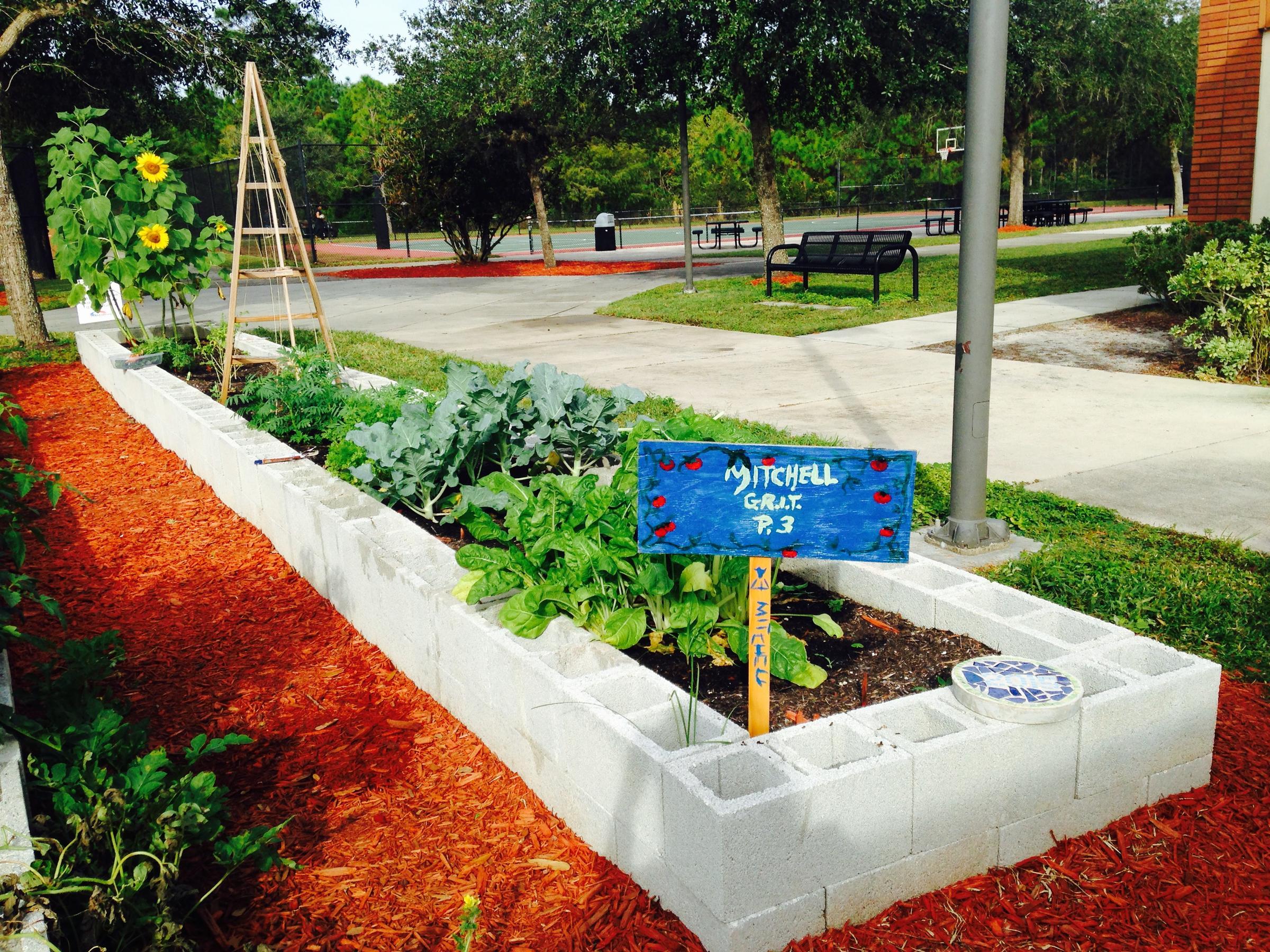 Local Teens Use School Garden To Feed Peers | WGCU News