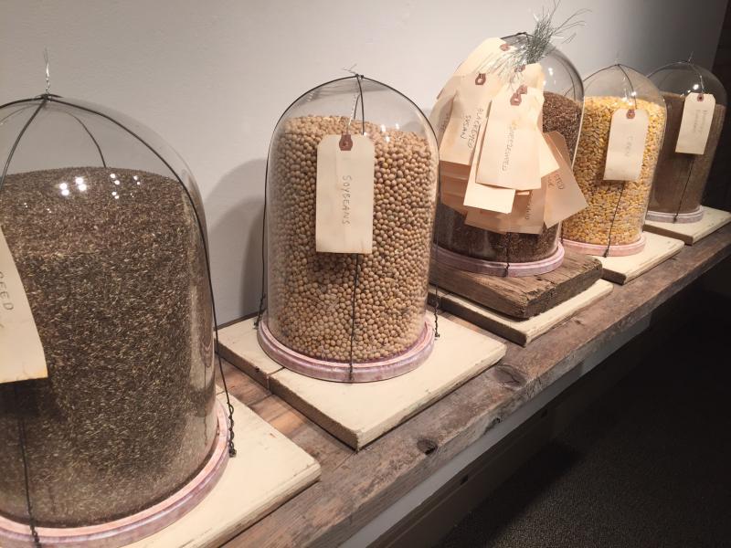 "Captured seeds from ""Elemental"""