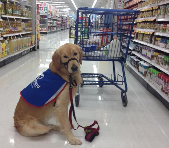 Service dogs help with daily tasks, making life easier for the disabled.