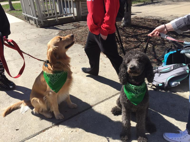 The bright green bandanas identify the dogs as part of the service program.