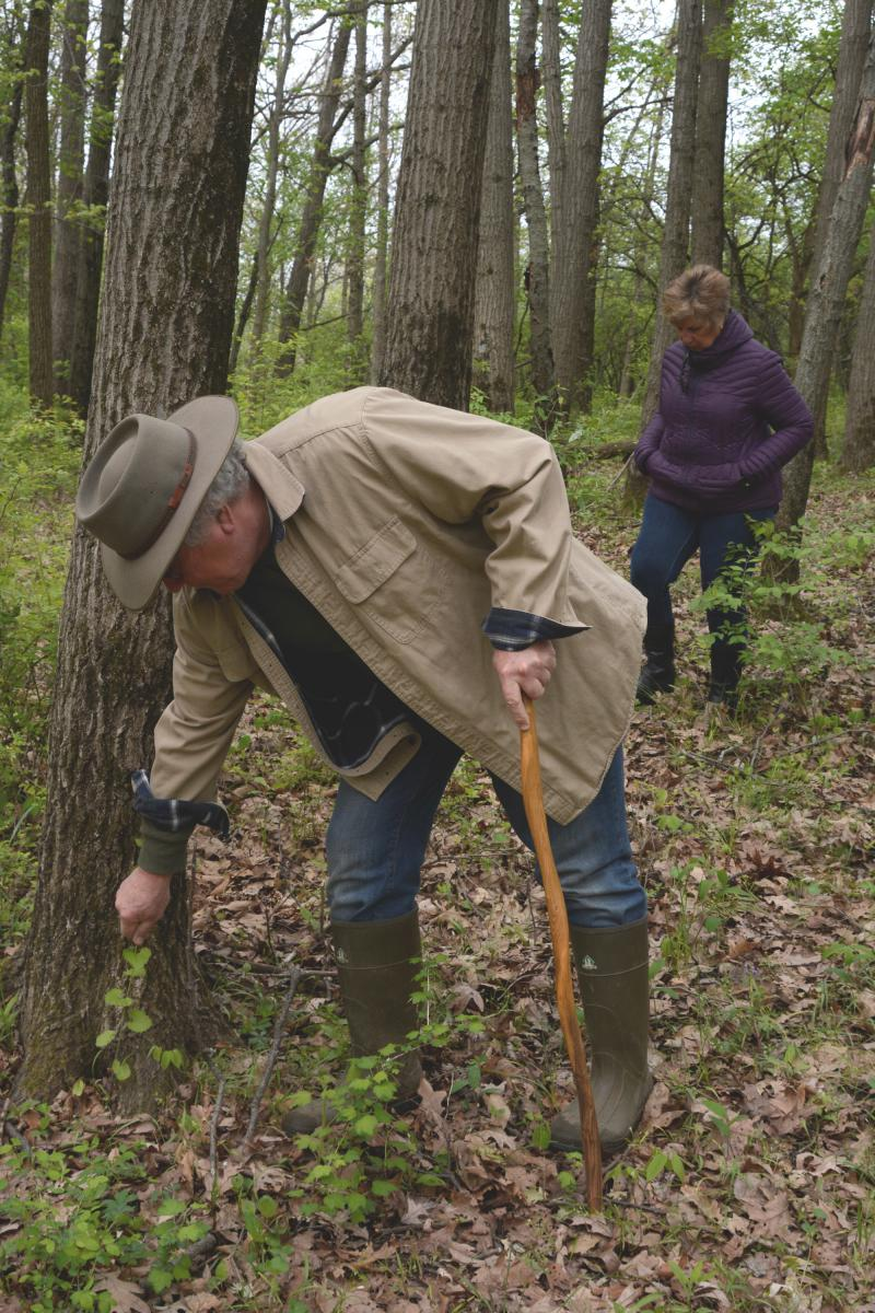 Joe Armstrong, a botany professor at Illinois State University, at Comlara Park. He oversees a project to compare current plants with those that botanists know were growing in central Illinois a century ago.