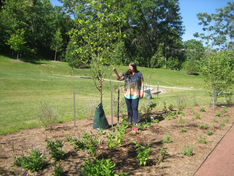 McLean County Master Gardeners planted a wide range of native plants in the Community Cancer Garden.